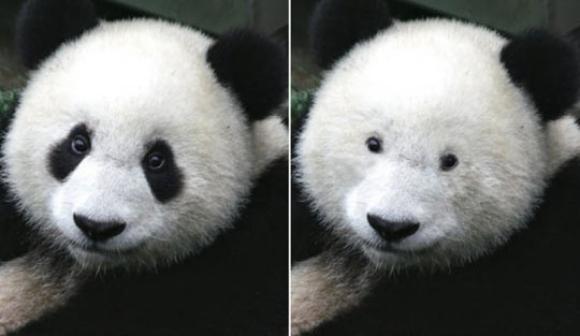 Panda-Eyes-Without-Dark-Rings